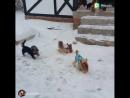 Аааааа...👏👏👏мой_рай😇 собаки -это любовь💘  верность преданность счастье йорки йоркширский_терьер🐶😍