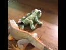 Iguana-goes-crazy-over-stuffed-lizard