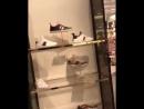 Hombre vuelto loco con el tema de gucci entra a la tienda oficial tirando todo al suelo