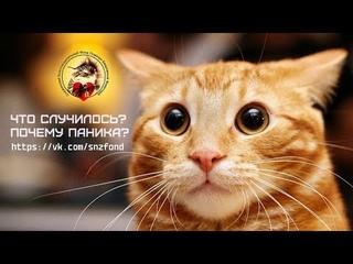 От чего все КОТИКИ впадают в детство? (#Котобол) (приют для котиков г. Снежинск)