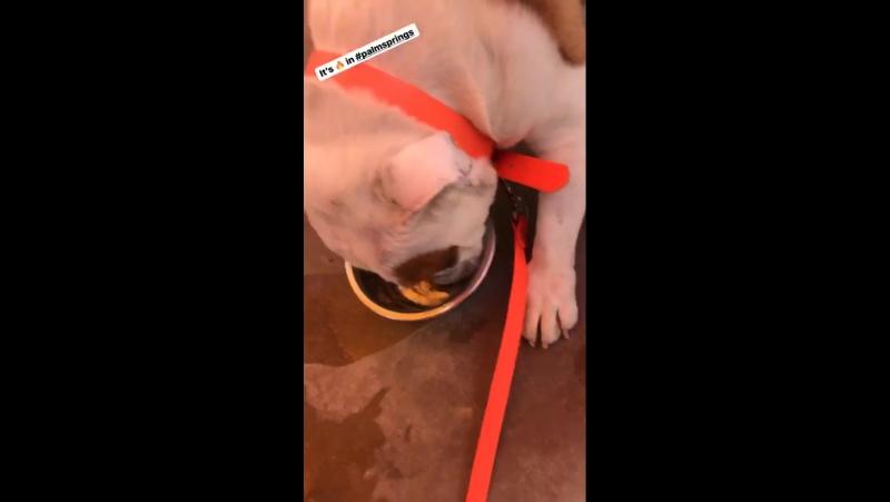 Bill Kaulitz Instagram Stories (27.01.2018): 🔥 в Палм-Спрингс