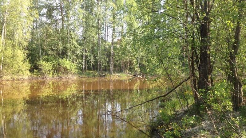 Лес в Горелово (3) Спб - Юг. Черта