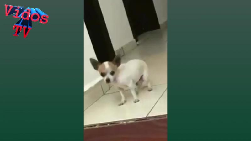 Собака Танцует Очень Ритмично