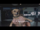 Trumpets - Sak Noel  Salvi - ft Sean Paul - Easy Fitness Dance Choreography