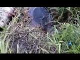 Куда пропала рыбка из садка
