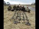Охота на гуся весной 2018 г. в Беларуси. СПЛОШНОЙ ЭКШН Подписывайся на канал