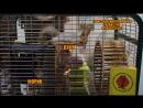 LIVE: ЖОРИК & ДУСЯ: сладкая алтайская парочка! Реальная жизнь замечательных бельчат:)