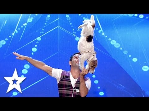 Acrobat Dogs have some SERIOUS Skills!   Auditions Week 2   Românii au talent