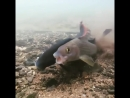 лютая рыба 2ch webm