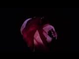 Dior Hypnotic Poison Commercial 360p