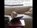 Когда ты пишешь кому-то гневное сообщение кому-то и кто-то заходит к тебе в комнату