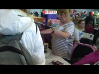 """В Красноярске проходит выставка кошек """"Золотая кошка"""""""