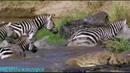 BBC Ребятам о зверятах Нильский крокодил Карл Документальный 2004