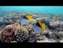 Подводный мир, Красное море, Египет