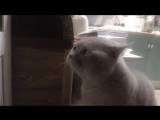 Кот говорит: открой мне!