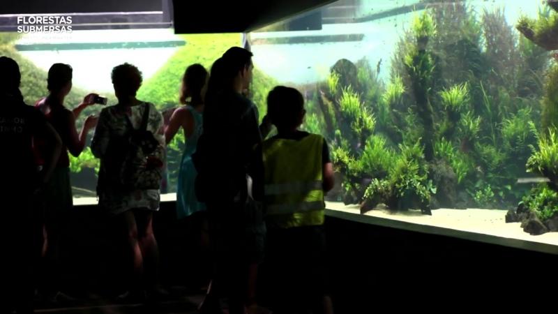 40-метровый растительный аквариум в Лиссабоне Такеши Амано