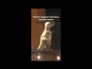 Монеточка - Спектакль про динозавров