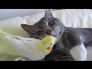 Самые забавные животные Любовь и дружба животных