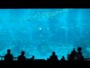 Сингапурский океанариум (S.E.A. Aquarium)