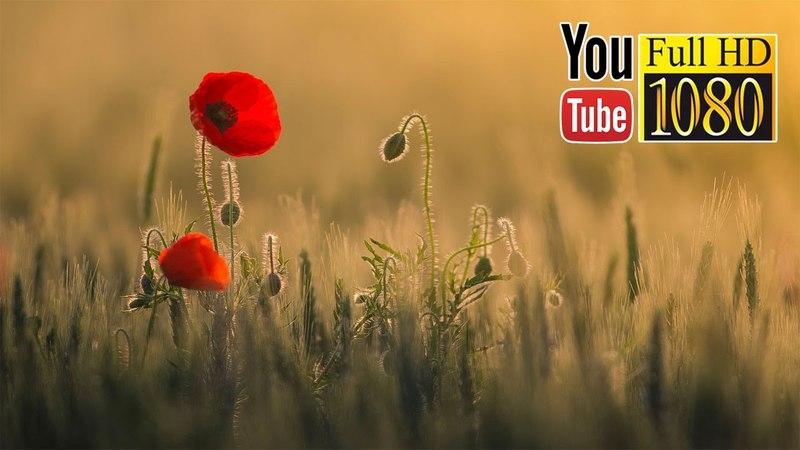 3 часа ✿ Дзен ✿ Красивая Музыка ✿ 639 Гц Четвертая Чакра - Анахата Сердечная Чакра
