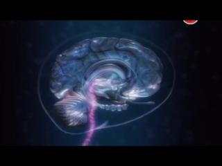 Наука Сна - связь недосыпа и переедания