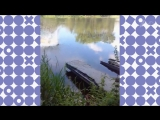 Спасительный водоем
