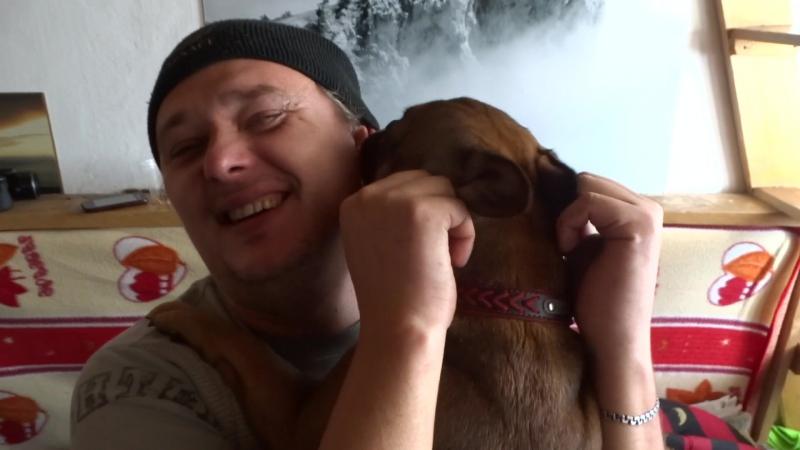 Собака Скарлетт поцеловала и убежала