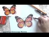 Как нарисовать БАБОЧКУ ЦВЕТНЫМИ КАРАНДАШАМИ. Учимся рисовать БАБОЧКУ