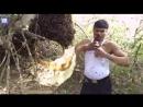Профессиональный сборщик меда из Индии
