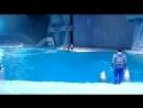 Москвариум шоу Тайна четырех морей дельфины