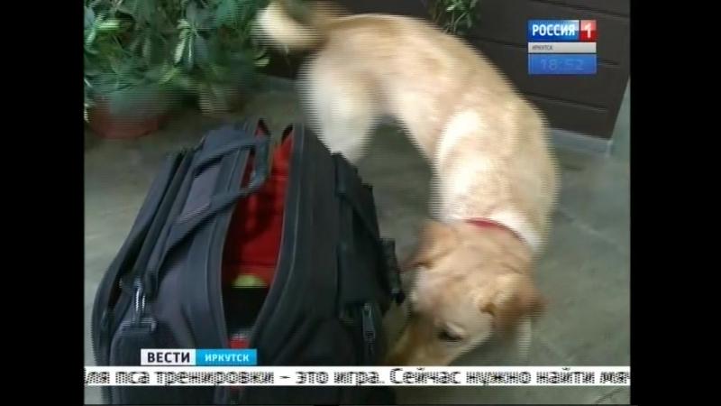 Пёс из Иркутска поедет в Сирию искать взрывчатку