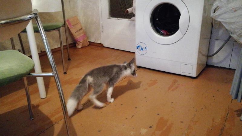 Yukiko знакомится со стиральной машинкой