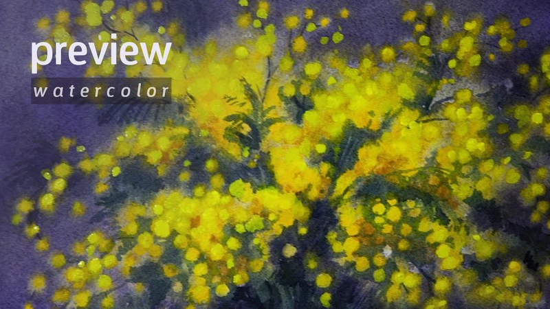 How to Draw a Acacia Dealbata (Mimosa) Watercolor. Preview.