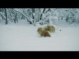 Кузя и Кира -полярники