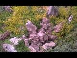 Видео для цветочных маньяков!!!