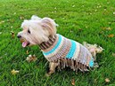 Hazel's Autumn Poncho Crochet Tutorial Dog Poncho