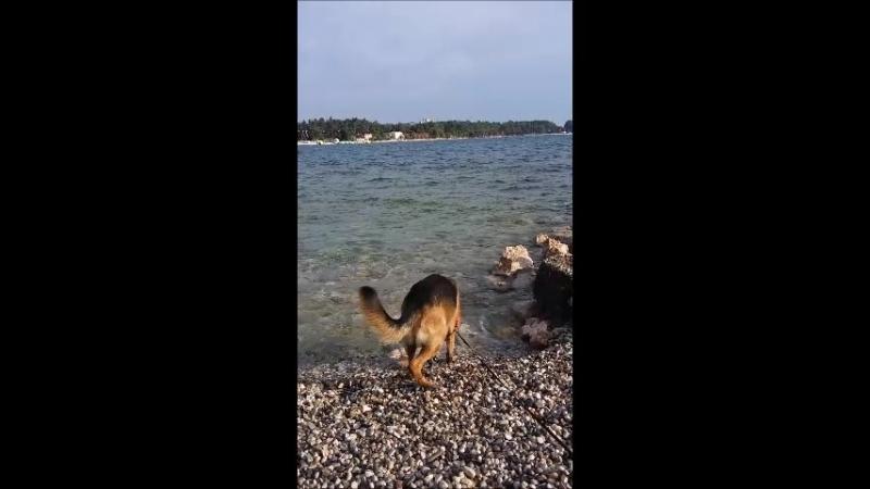 Porec, Croatia: Клодяшка на море (Пореч, Хорватия)