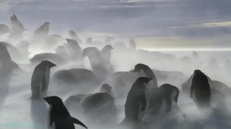 BBC «Ошибки природы» (Документальный, животные, 2014)
