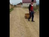 Сельская жизнь