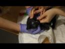 Котенок Маленький Мук. Удален глазик