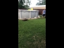 Tortoise Chases Lawnmower __ ViralHog