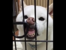 Пёс обитель