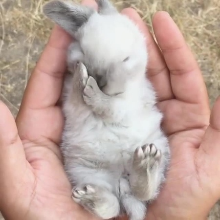"""Animalsluxury on Instagram """"What a sweet little bunny! 😍 Want A Cute Cable Chomper Check Our Bio! Follow @animalsluxury for more! Video By @legen..."""