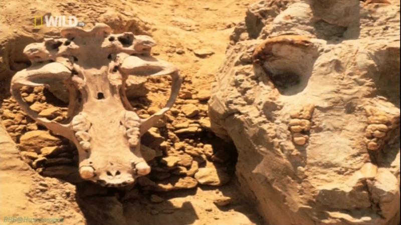 «Доисторические хищники: Короткомордый медведь» (Познавательный, природа, животные, 2007)