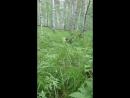 Виринея Владычица Леса Из Стального Края