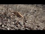 Рыжее чудышко осваивает навыки охоты! #ГужевTV