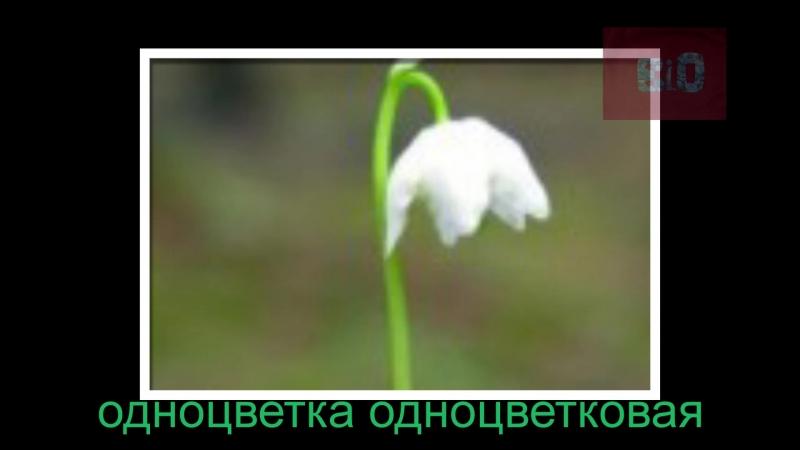растения часть 1