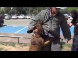 Собака, которая умнее многих в сто раз (6 sec)