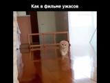 Этот котик пугает