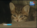 Зоозащитники в Иркутске помогают в бесплатной стерилизации домашних животных, «Вести-Иркутск»